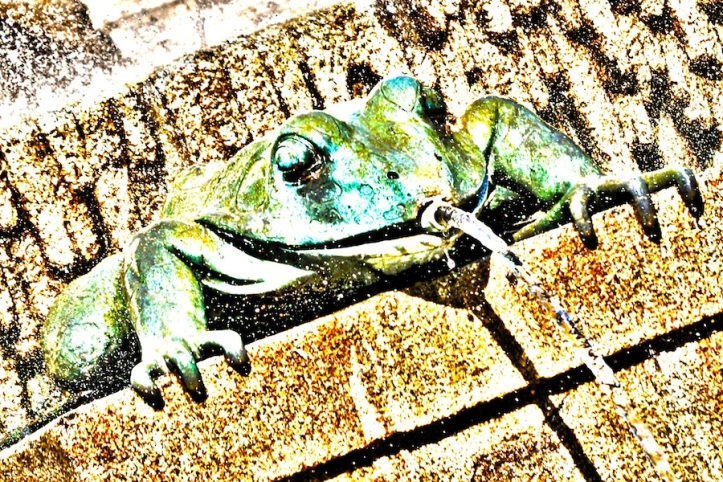 It's A Frog's Frog's World