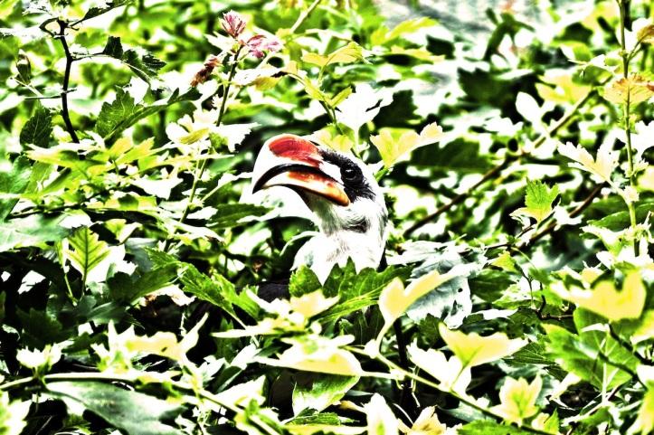 Hidden Among The Leaves