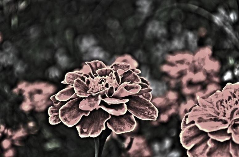 ...Is Like A Flower In The Dark