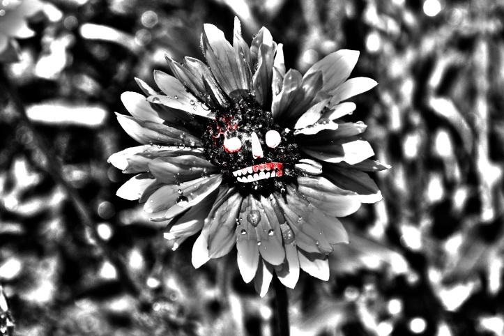 Skullflower