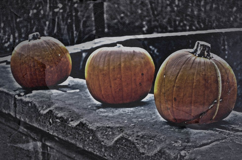 Lining Up The Pumpkins