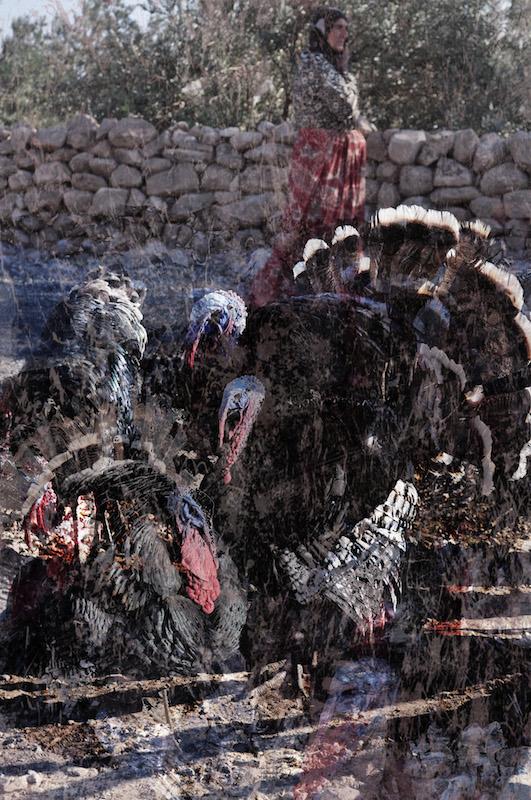 The Turkey Farm