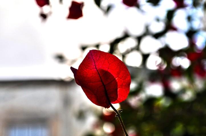 Red (Disambiguation)