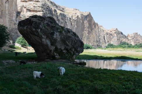 Goats By The River