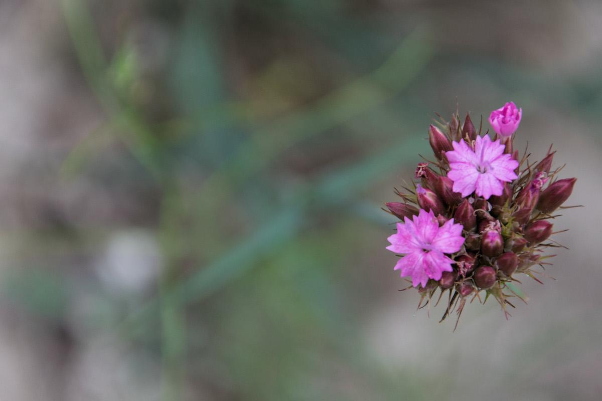 the_floating_flower-rabirius