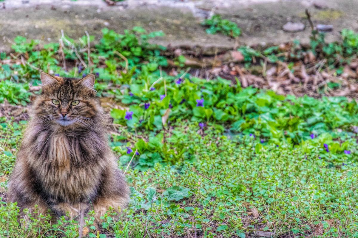 A Fluffy Cat