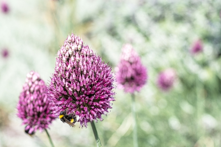 A Feast For Bumblebees