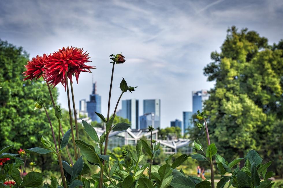 Gigantic Flowers