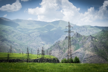 Forest Of Power Poles