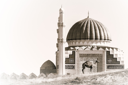 The Framed Camel