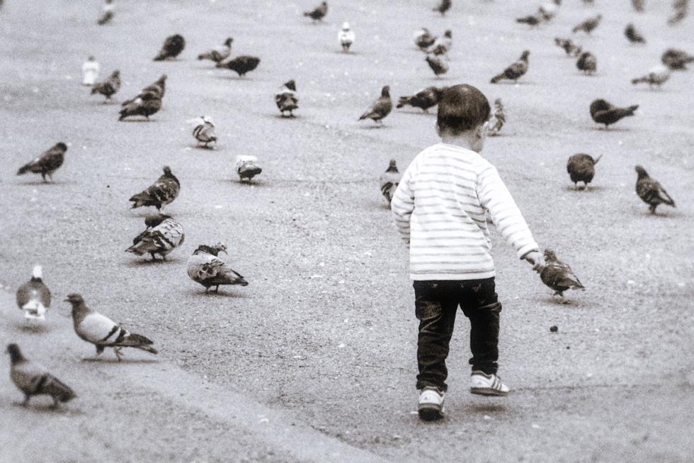 All The Pretty Little Birdies