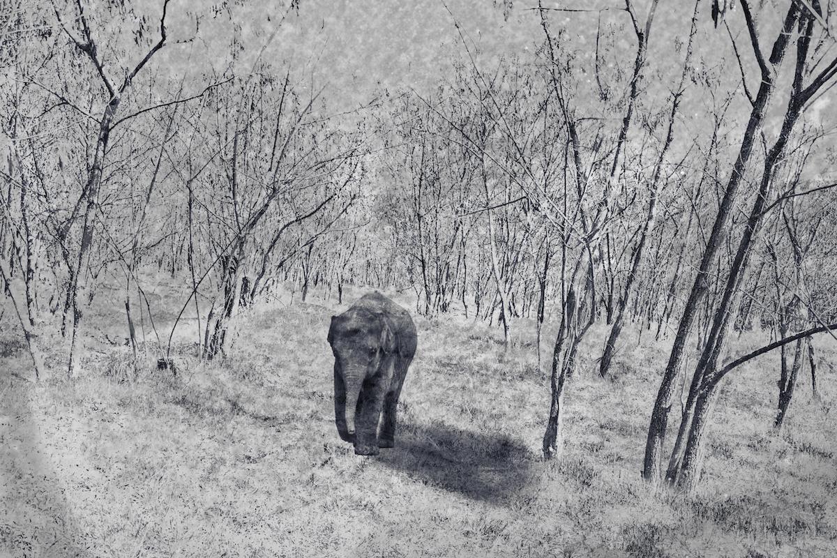 Lost Little Elephant