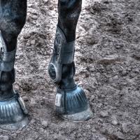 Cyborg Horse