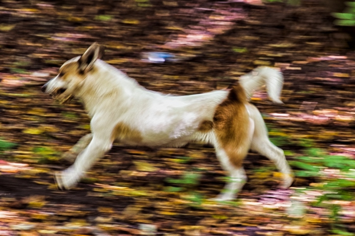 running_dog-rabirius