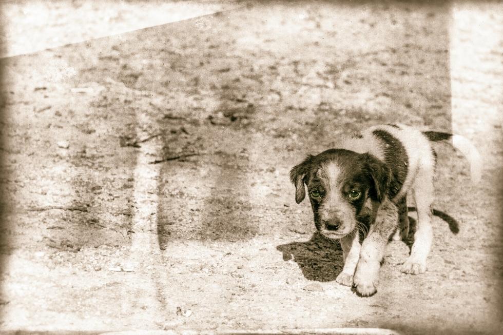 A Dog Remembers Its Childhood