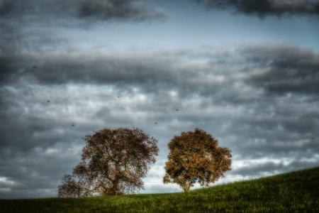 Trees On A Leash