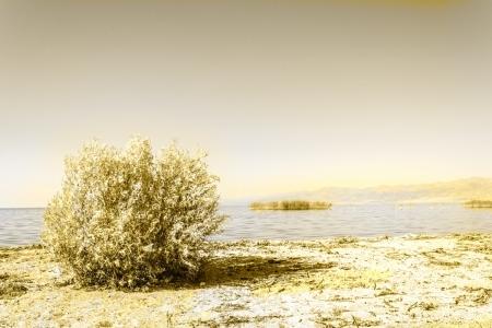 Yellowing Landscape