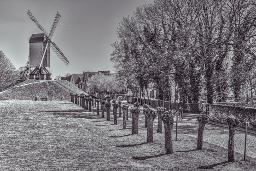 The Windmill Of Your Mind