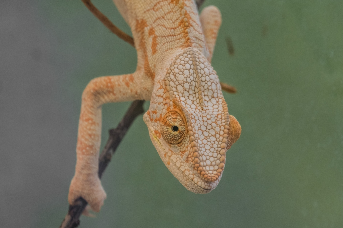 Observations Of A Cameleon