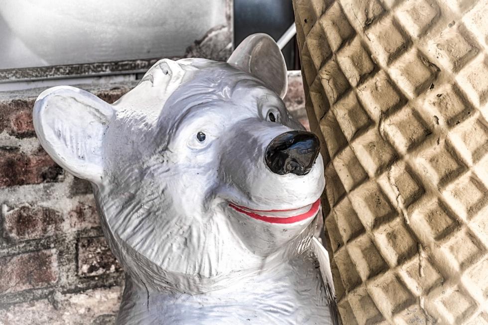 The Smile Of The Polar Bear