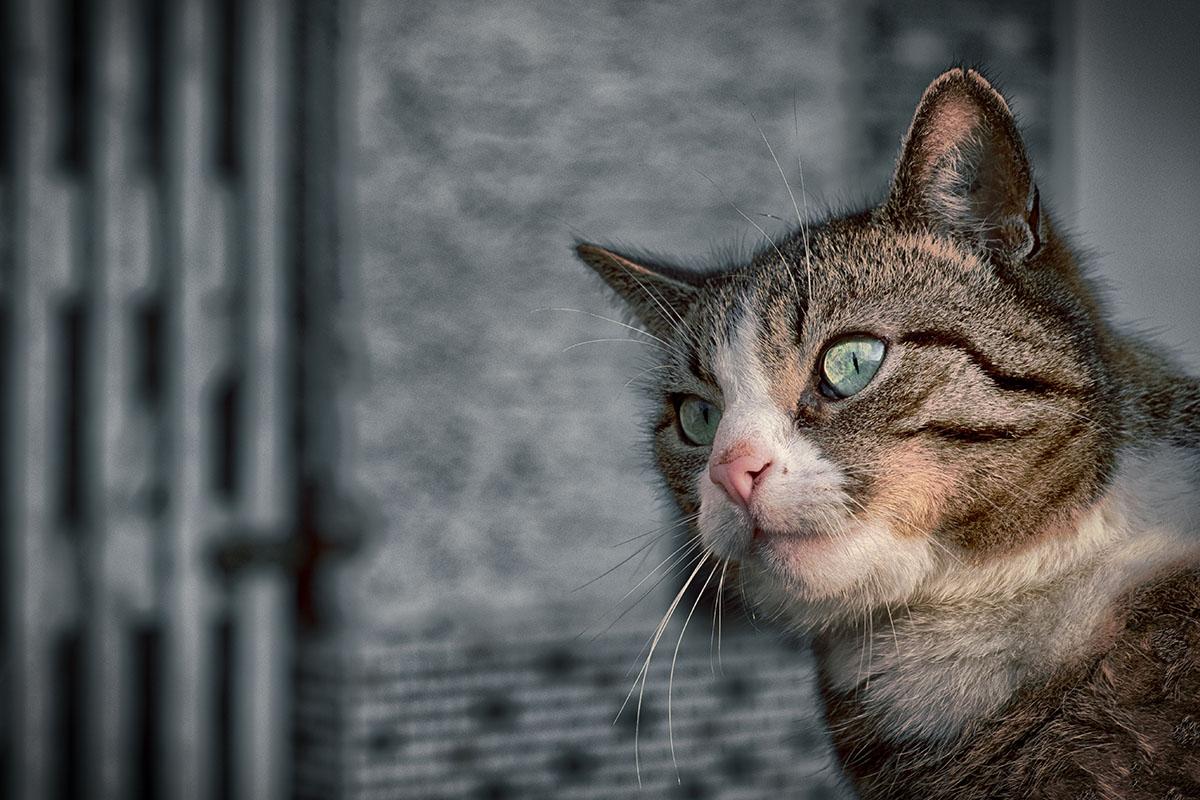 Under The Spell Of The Kitten's Eye