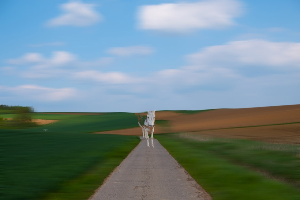 The Approaching Donkey